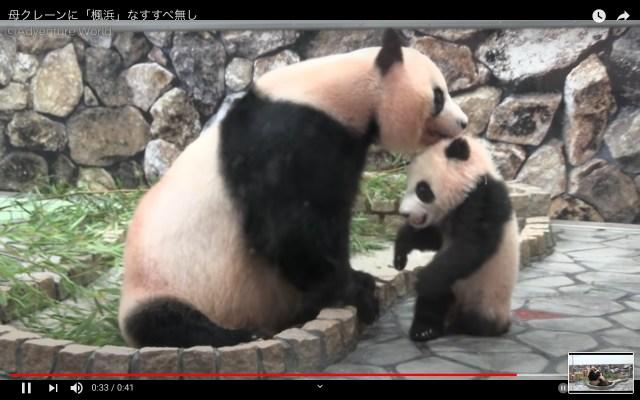 「はいはいミルクの時間ですよ!」母パンダにクレーンみたいに持ち上げられちゃった子パンダがかわいい…♡
