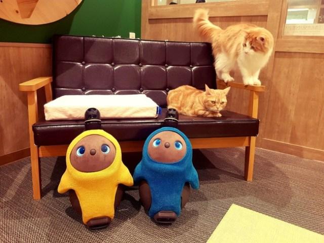 これぞ癒やしのWパンチ! LOVOT&猫と触れ合える夢のような体験ルームが誕生したよ~!