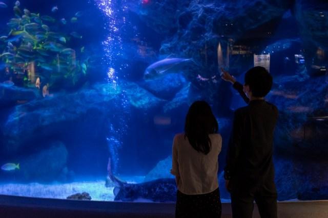 東京・すみだ水族館で「夏の夜すい」開催決定! ペンギン×プロジェクションマッピングやクラゲのワークショップなど
