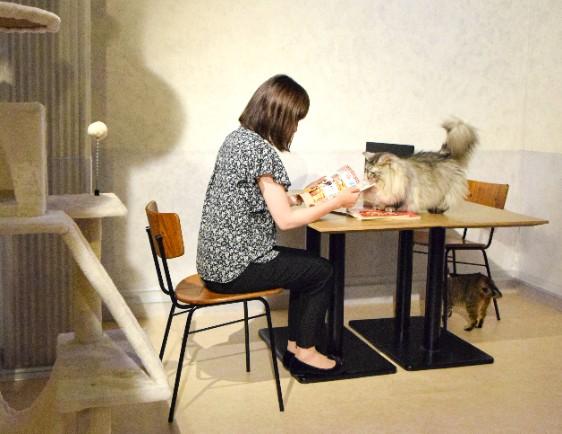 猫ちゃんがいる環境でリモートワーク♪ 仕事が世界一はかどらなそうな「ニャワーケーション」がナンジャタウンに登場