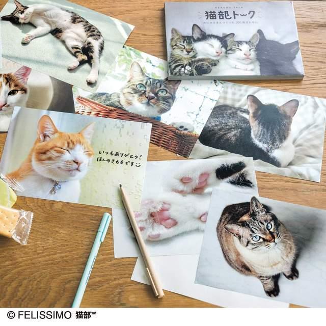 """フェリシモ猫部の 「みにゃさまとつくった猫部トーク100枚びんせん」が良い…♡ いろんなお家の """"愛され猫ちゃん"""" を拝めます!"""